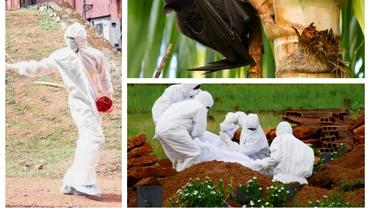 Un nou virus creează panică în India. Care sunt simptomele și câți dintre bolnavi își pierd viața