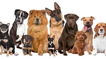 Cât trăiește un câine. 4 alte curiozități despre prietenul omului