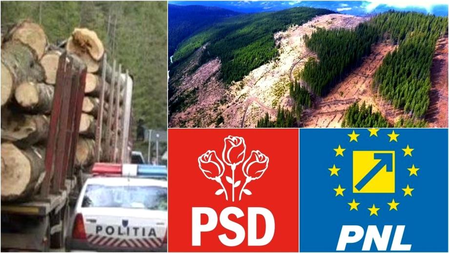 Ciuma roșie și mafia portocalie, atac frontal asupra pădurilor din România! Istoricul unui minister fără rezolvări