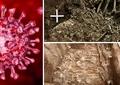 Lumea nu se confruntă cu prima pandemie de coronavirus. Molima care a măturat omenirea acum 20.000 de ani
