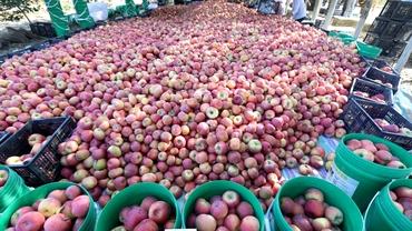 Unde sunt merele românești? Marile magazine vând numai produse de import