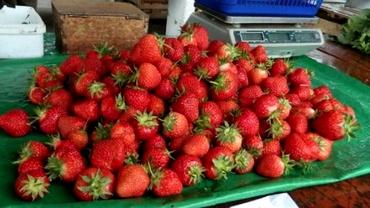 Căpșunele românești, preț dublu față de cele din import! Acuze dure ale fermierilor