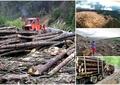 Pădurile, scandal fără sfârșit între activiștii de mediu și minister! Acuze dure de ambele părți
