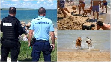 Câinii, interziși pe litoralul românesc! Amenzi uriaşe pentru cei care își aduc patrupedul pe plajă