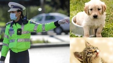 Se fac angajări la Poliția Animalelor. 264 de posturi, scoase la concurs. Care sunt condițiile