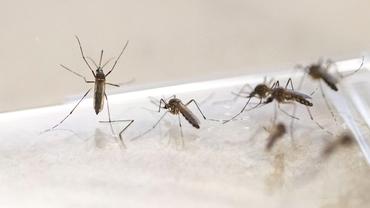 Țânțarii purtători de dengue, zika și febră galbenă ar putea fi ceva normal în Europa în următorii 10 ani! De vină ar fi schimbările climatice