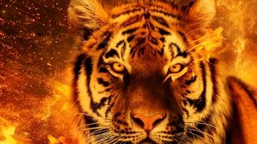 Zodiac chinezesc pentru luni, 5 octombrie 2020. Nativul Tigru ia câteva decizii fără precedent