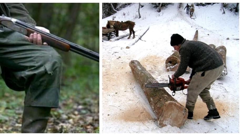 """Ministerul Mediului vrea înarmarea pădurarilor împotriva hoților de lemne! """"Acțiunile trebuie să le facă cu armamentul din dotare"""""""