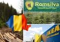 Cine deține pădurile României! Romsilva și IKEA, cei mai mari proprietari
