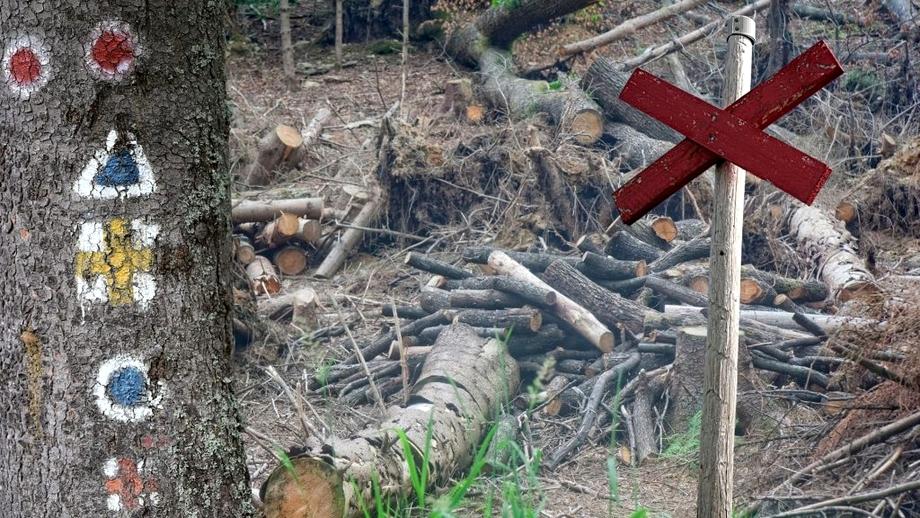 """Traseele pe munte și marcajele turistice, victime colaterale ale tăierilor de pădure! """"Au blocat poteca, au făcut șanțuri cu utilajele"""""""