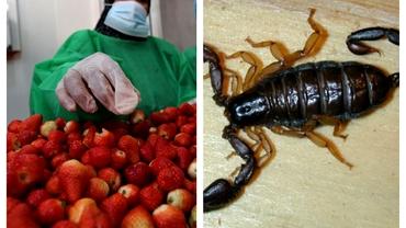 Caz bizar la Constanța. Angajata unui supermarket, înțepată de un scorpion. Cum a fost posibil
