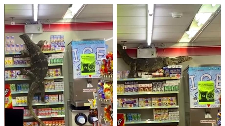 O șopârlă gigant a făcut ravagii într-un supermarket din Thailanda. Cum au reacționat cumpărătorii. Video