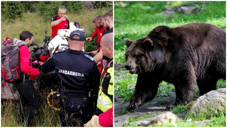 Ursul care a ucis un cioban în vârstă de 26 de ani a fost găsit mort, în pădure