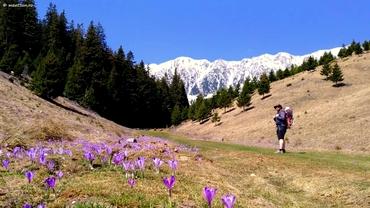 Amenzi uriașe pentru cei care rup flori la munte. Cât trebuie să scoată din buzunar