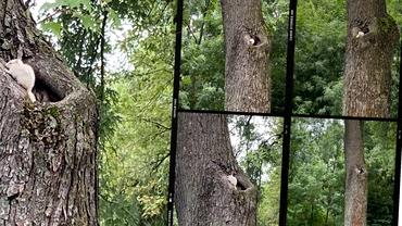 Apariție rară în Parcul Mogoșoaia! Animalul care i-a lăsat pe toți fără cuvinte. Este o mutaţie genetică. Video