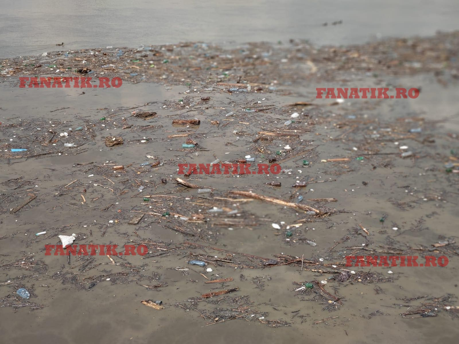 Gunoaiele din râul Jiu a ieșit la suprafață