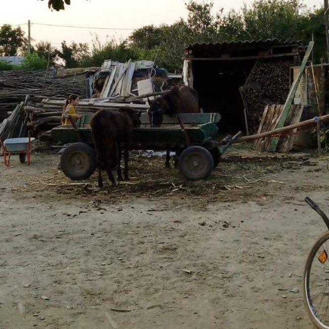 Familia Cârjan se chinuie să le ofere copiilor strictul necesar