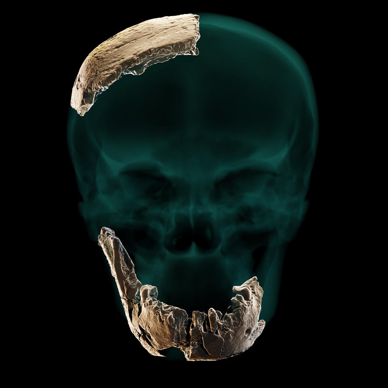 Fragmentele de craniu și de mandibulă ale lui Nesher Ramla Homi. Sursa foto: Tel Aviv University, eurekalert.org.